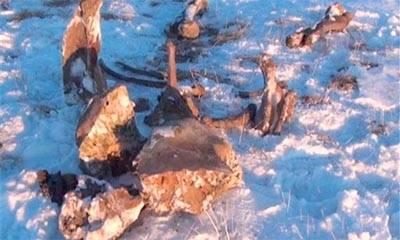 Restos de mamut con sangre líquida fue hallado en el Ártico