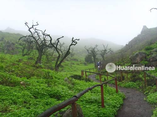 Las Lomas de Lachay a 150 kilómetros de Lima (VÍDEO)
