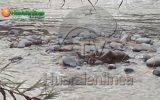 Encuentran cuerpo de hombre que cayó al río Chancay – Huaral (Vídeo)